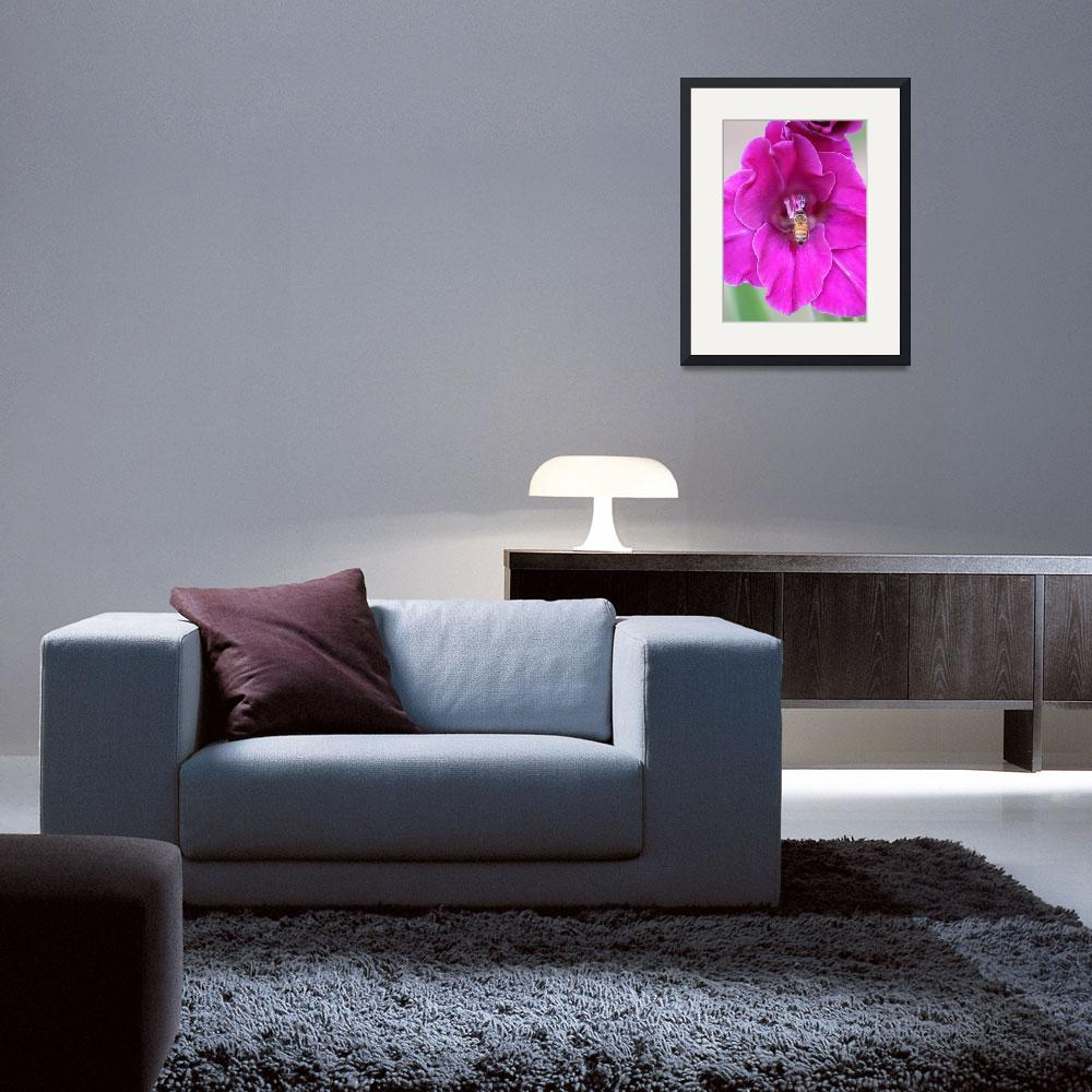"""""""Bee on Pink Gladiola&quot  (2014) by Groecar"""