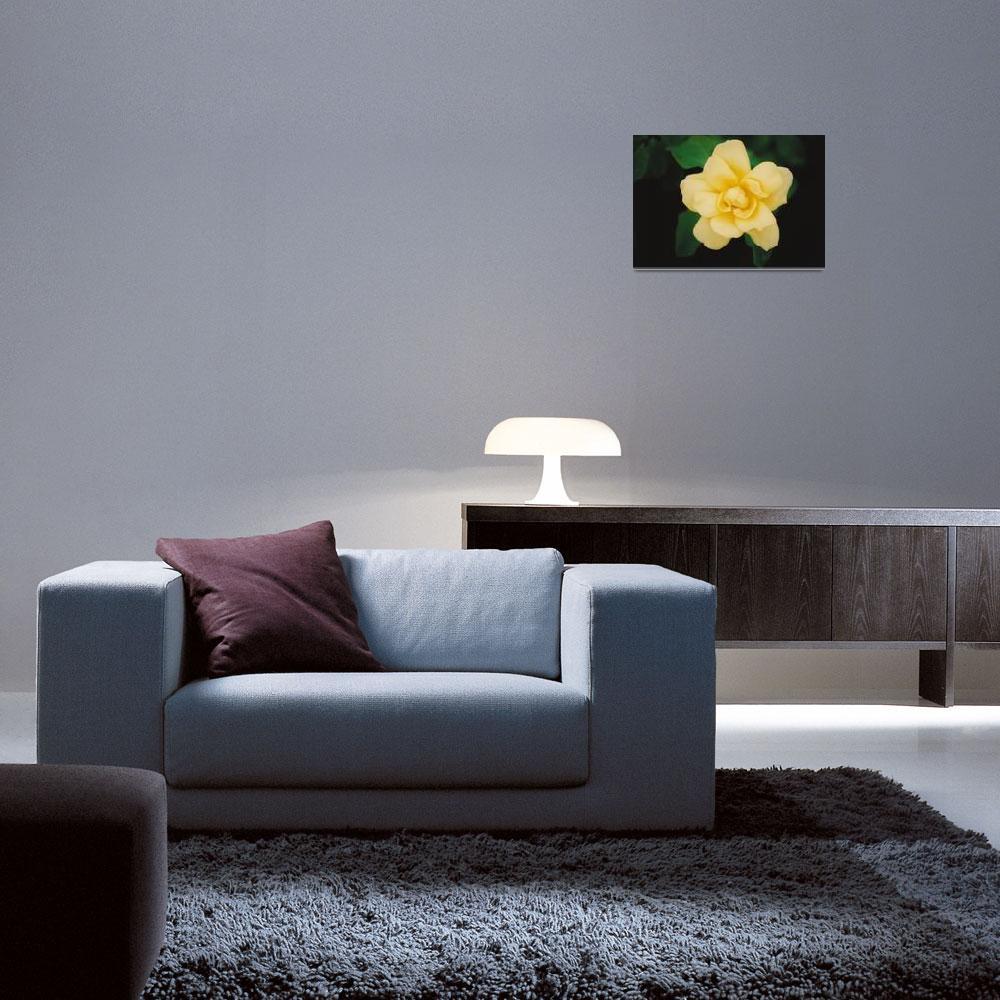 """Yellow Rose&quot  (2006) by MarkDavidJones"