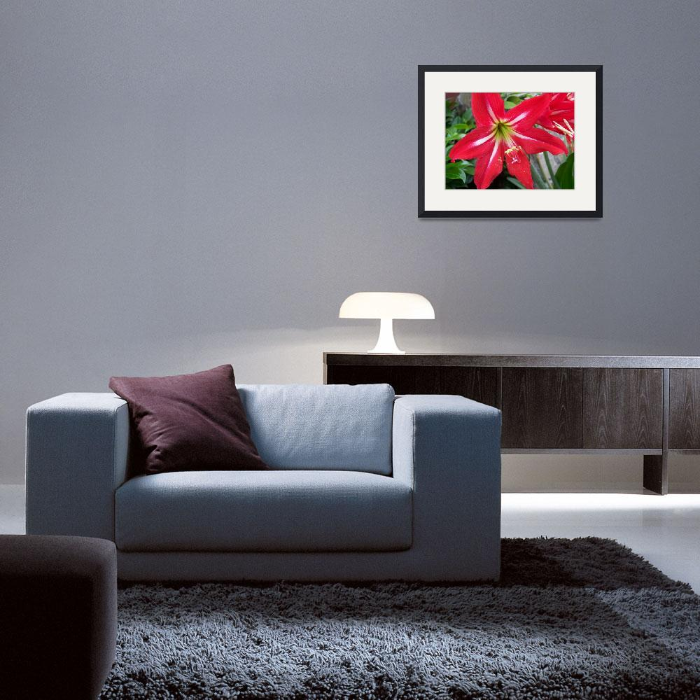 """""""big red flower 1&quot  (2009) by imagineit"""