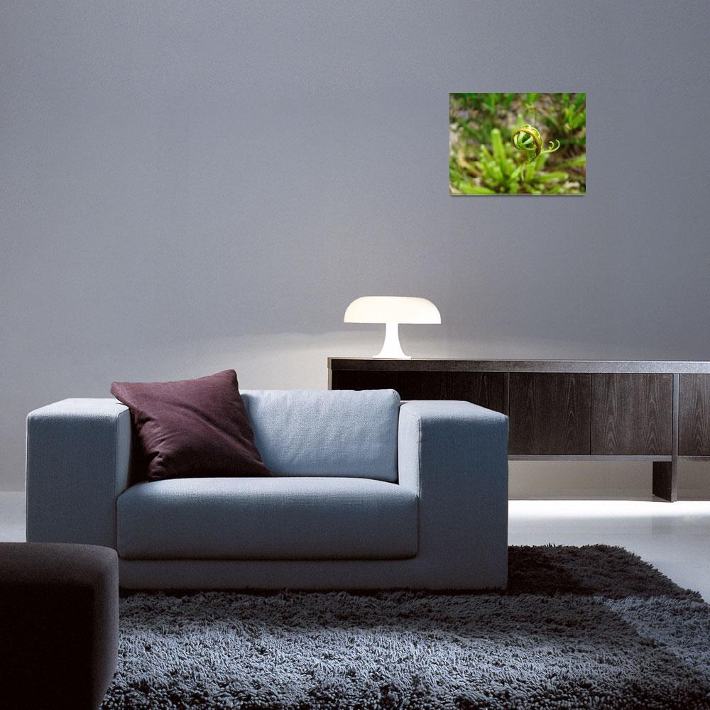 """Fern Frond Branch Unfolding Green Forest Ferns""  (2014) by BasleeTroutman"
