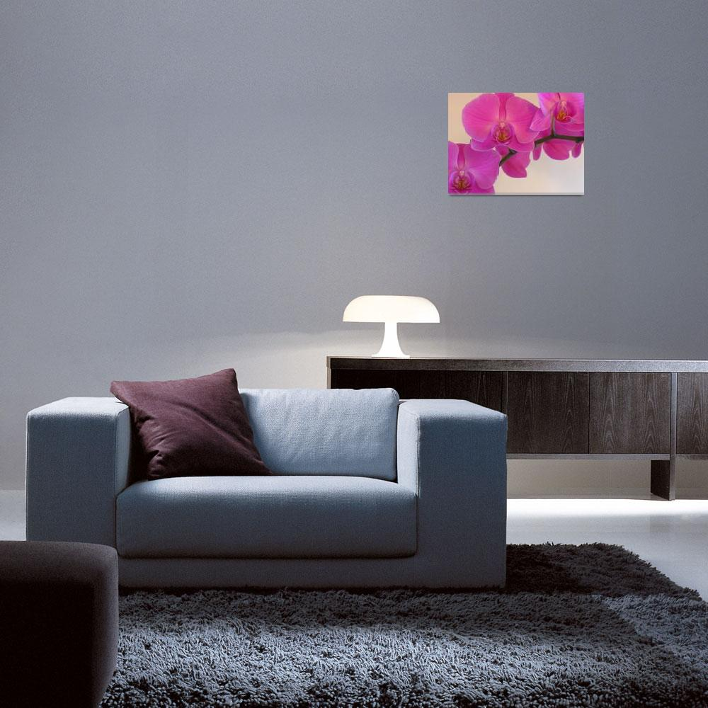 """""""Pink Orchid""""  (2008) by SnapitNow"""
