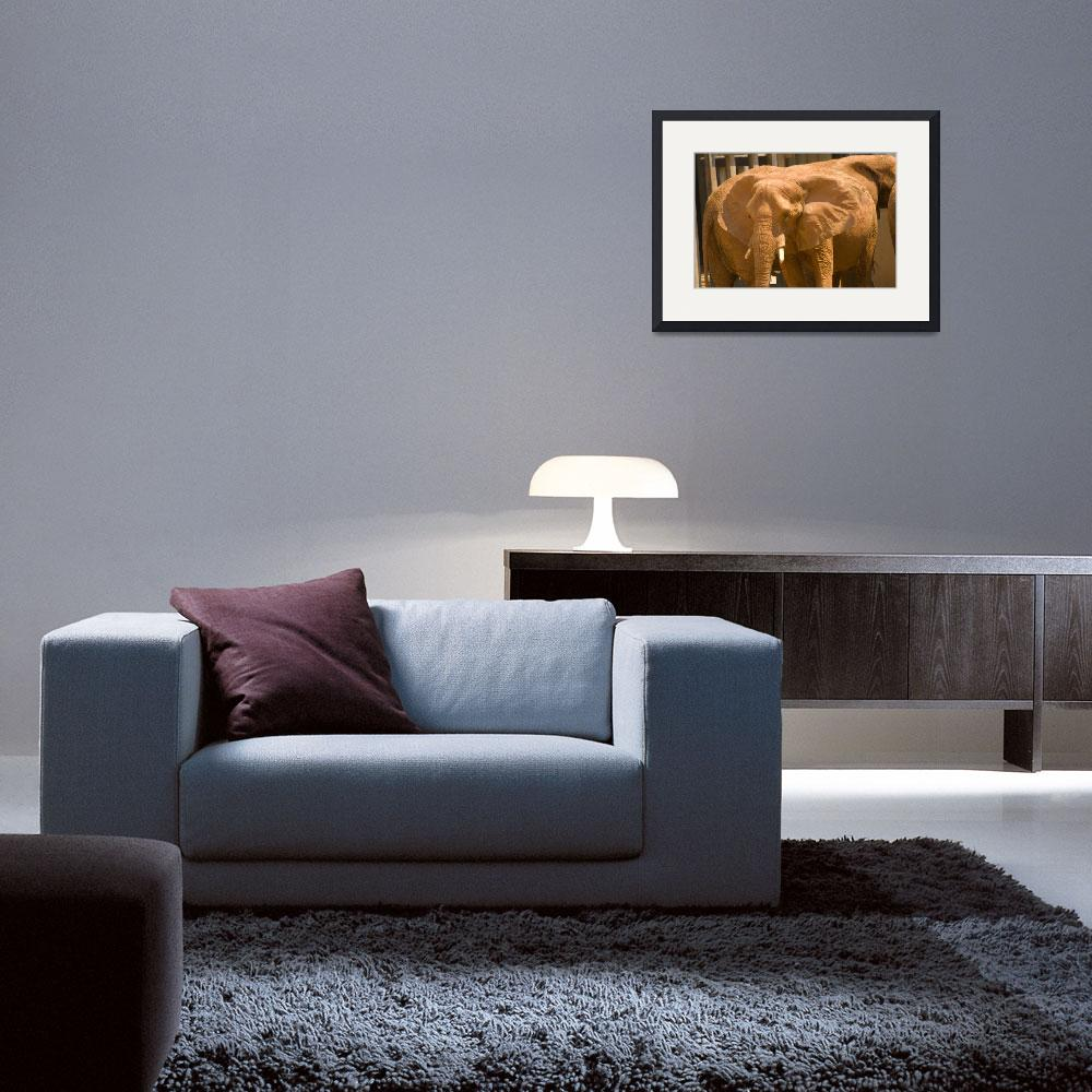 """""""clayelephant&quot  (2008) by lesillphotography"""