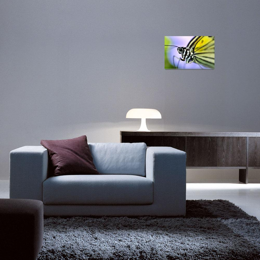 """""""Butterfly Close&quot  (2012) by JoaoPonces"""