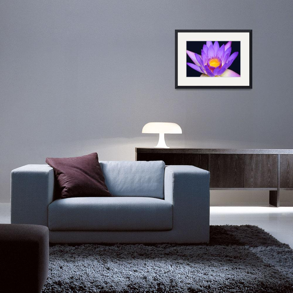 """Lavender Water Lily 2&quot  (2009) by FordLou"
