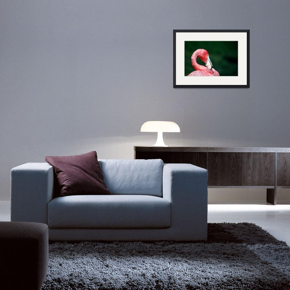 """""""flamingo2&quot  by christopherboswell"""
