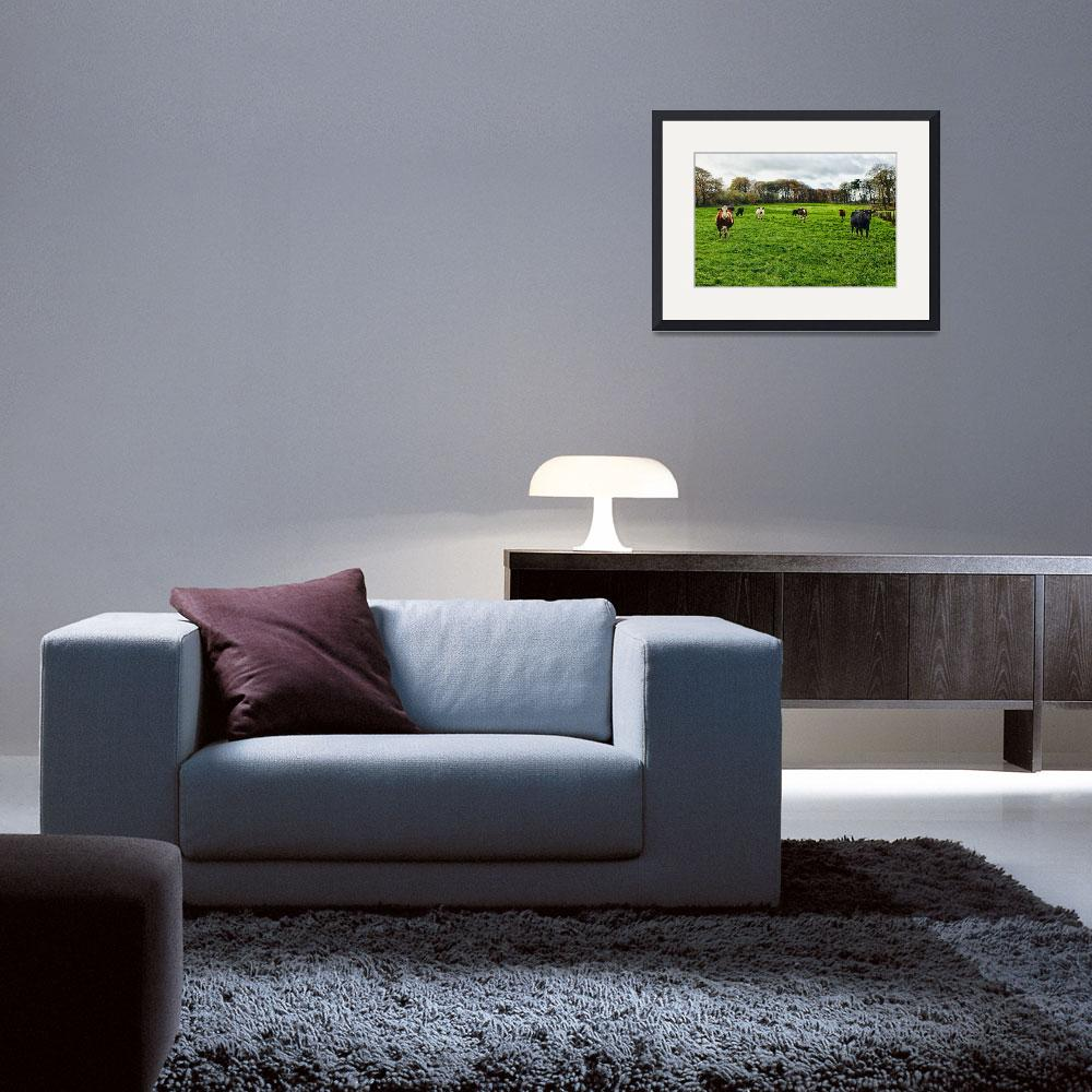 """""""Cows in a Field&quot  by stewak"""