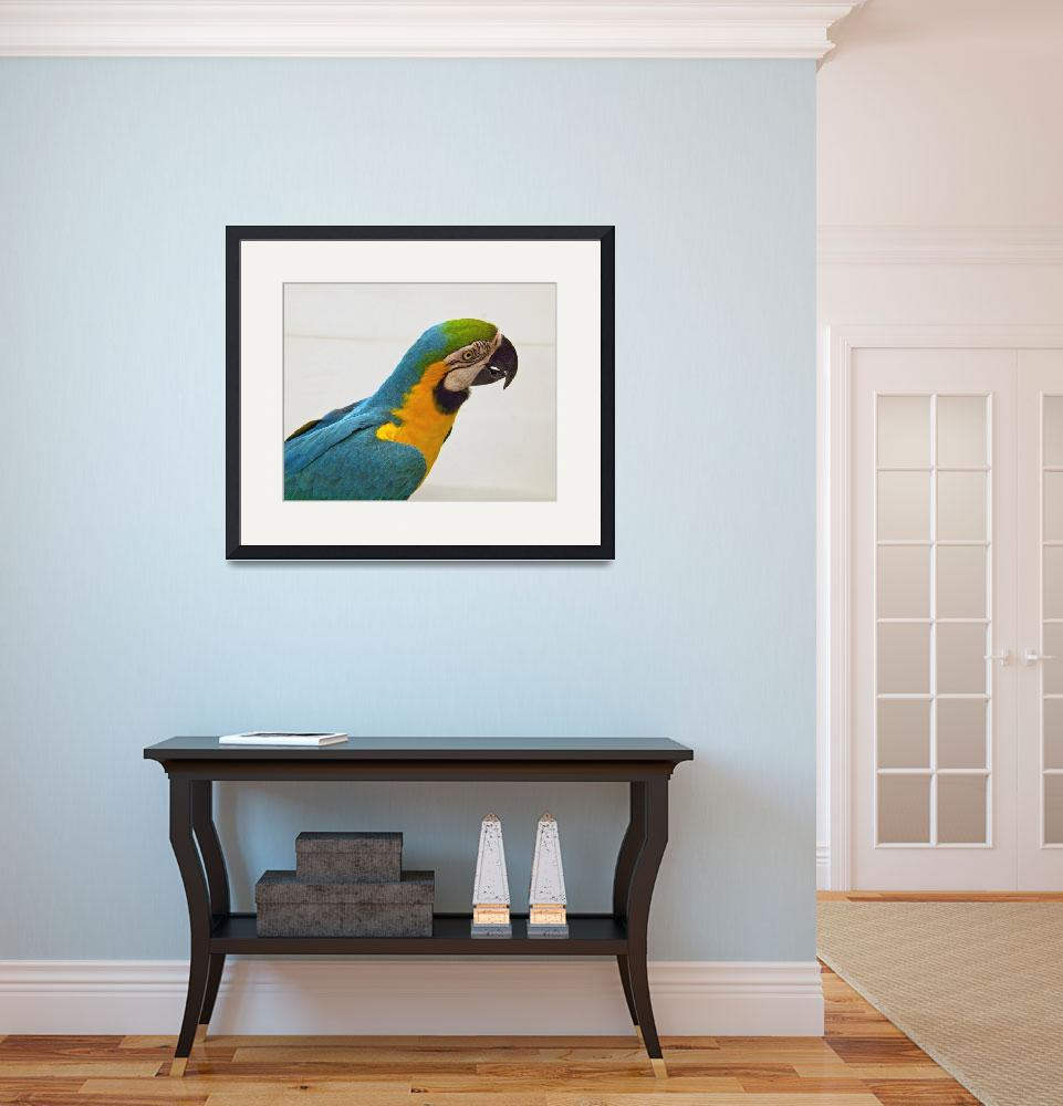 """""""Blue and Gold Macaw (1)&quot  (2011) by janesprints"""