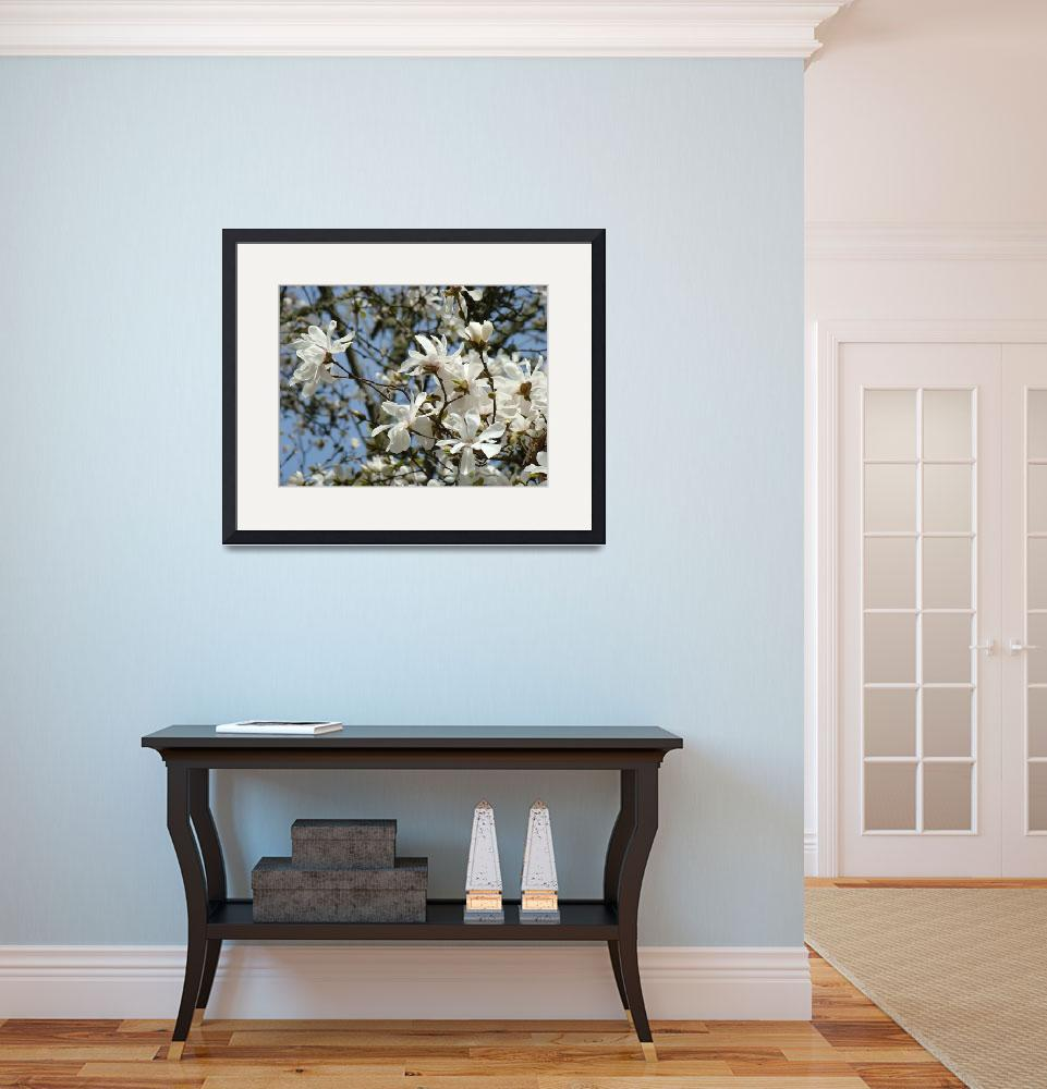 """""""Spring Magnolia Flower White Art Magnolia Tree&quot  (2009) by BasleeTroutman"""