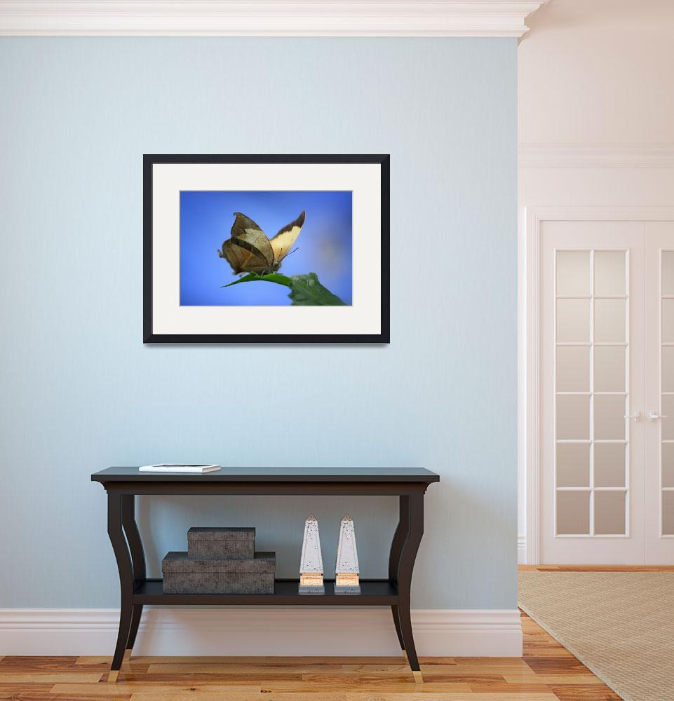 """""""Pearly Leafwing Butterfly&quot  (2017) by KsWorldArt"""