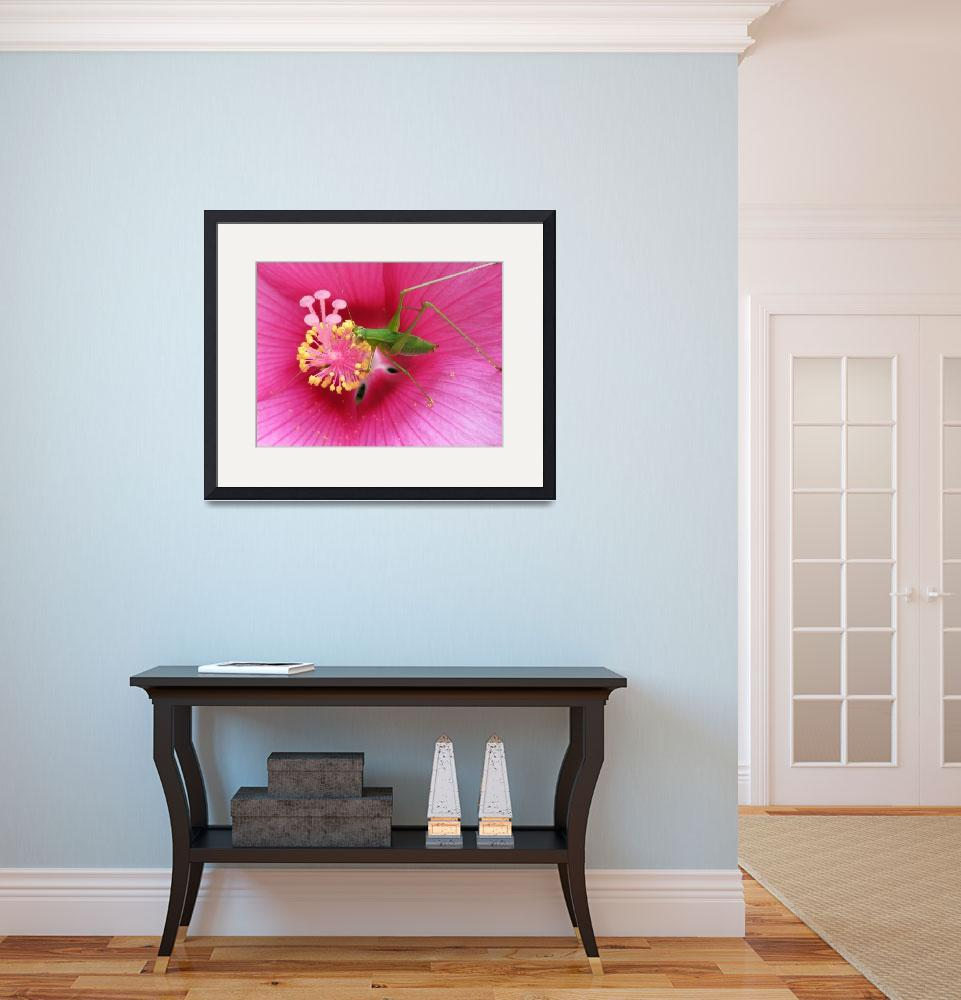 """""""Katydid on Pink Hibiscus Flower&quot  (2008) by VickisNature"""
