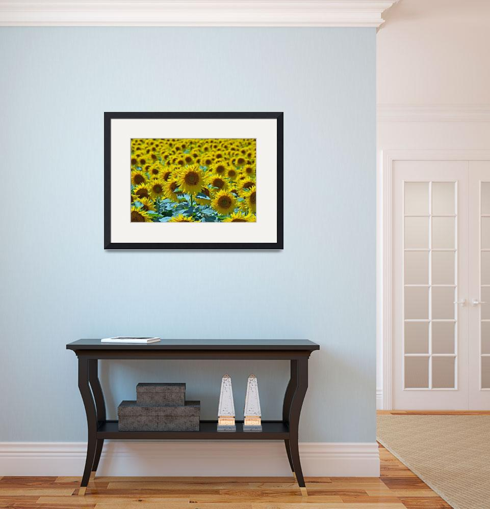 """""""Sunflowers&quot  (2010) by ImageArt-Photography"""