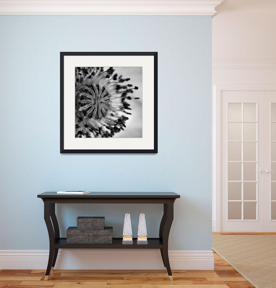 """""""Pink Poppy in Black and White&quot  (2008) by Gracey"""