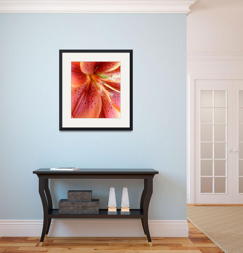 """Burnt Orange Lily 23, Colorado&quot  (2008) by sethgoldstein72"