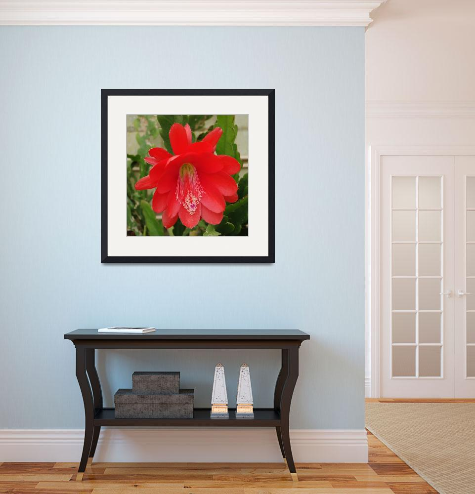 """""""Red Flowering Cactus&quot  (2014) by AdrianWale"""
