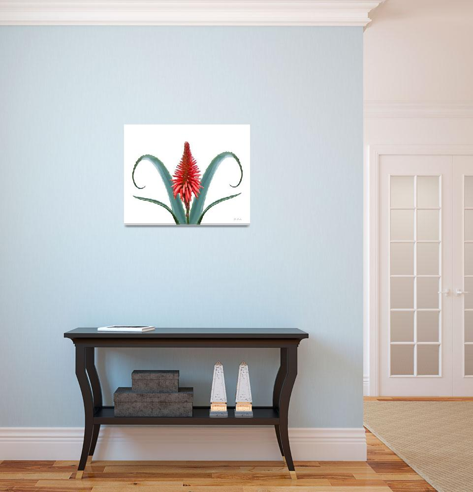 """Candelabra Aloe""  (2010) by RobinCowles"