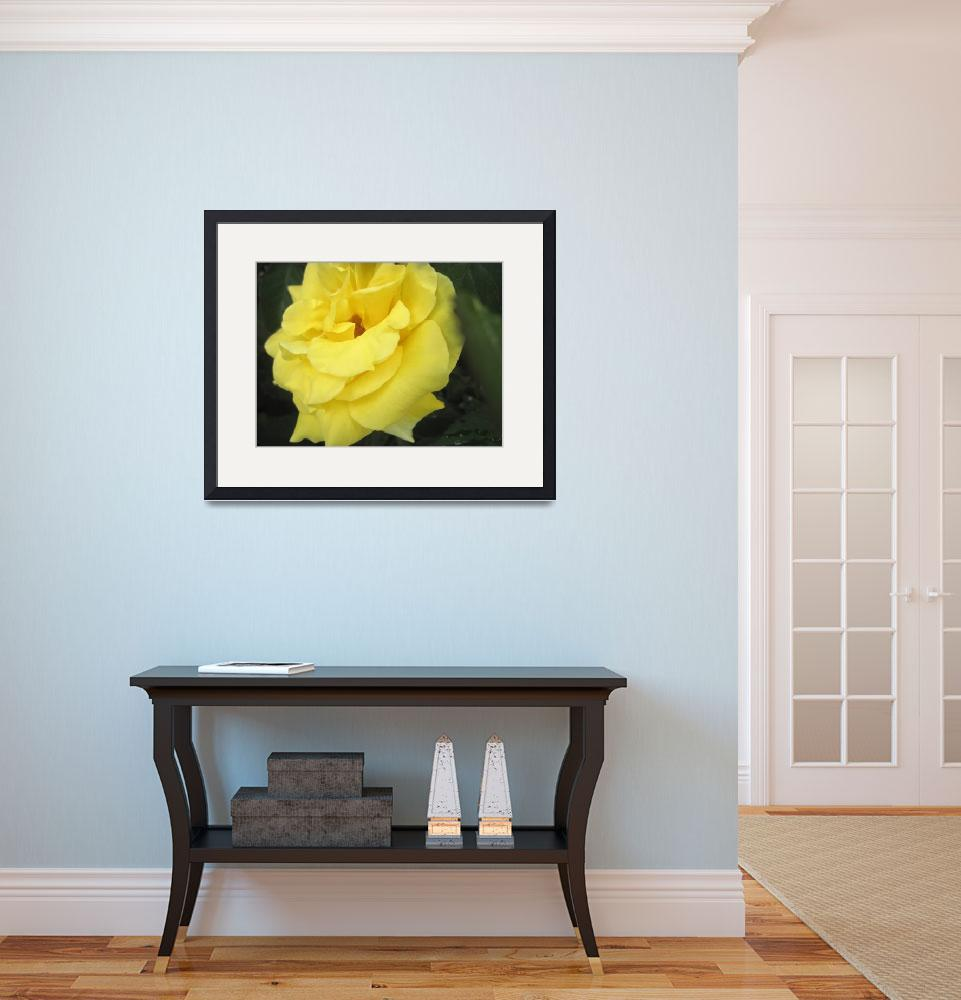 """A Yellow April Rose&quot  (2012) by johnscanvassprints"