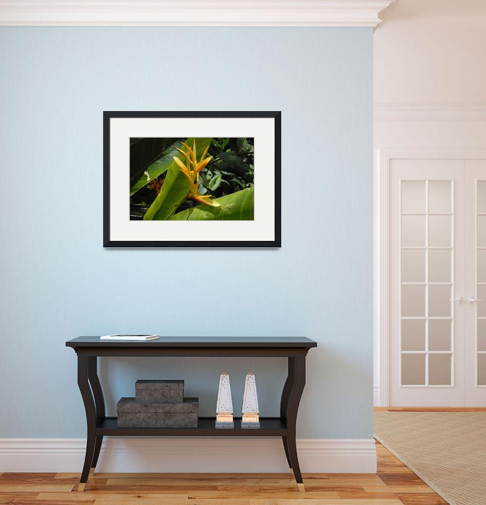 """""""Cayman Islands Exotic Plant Life&quot  by RonScott"""