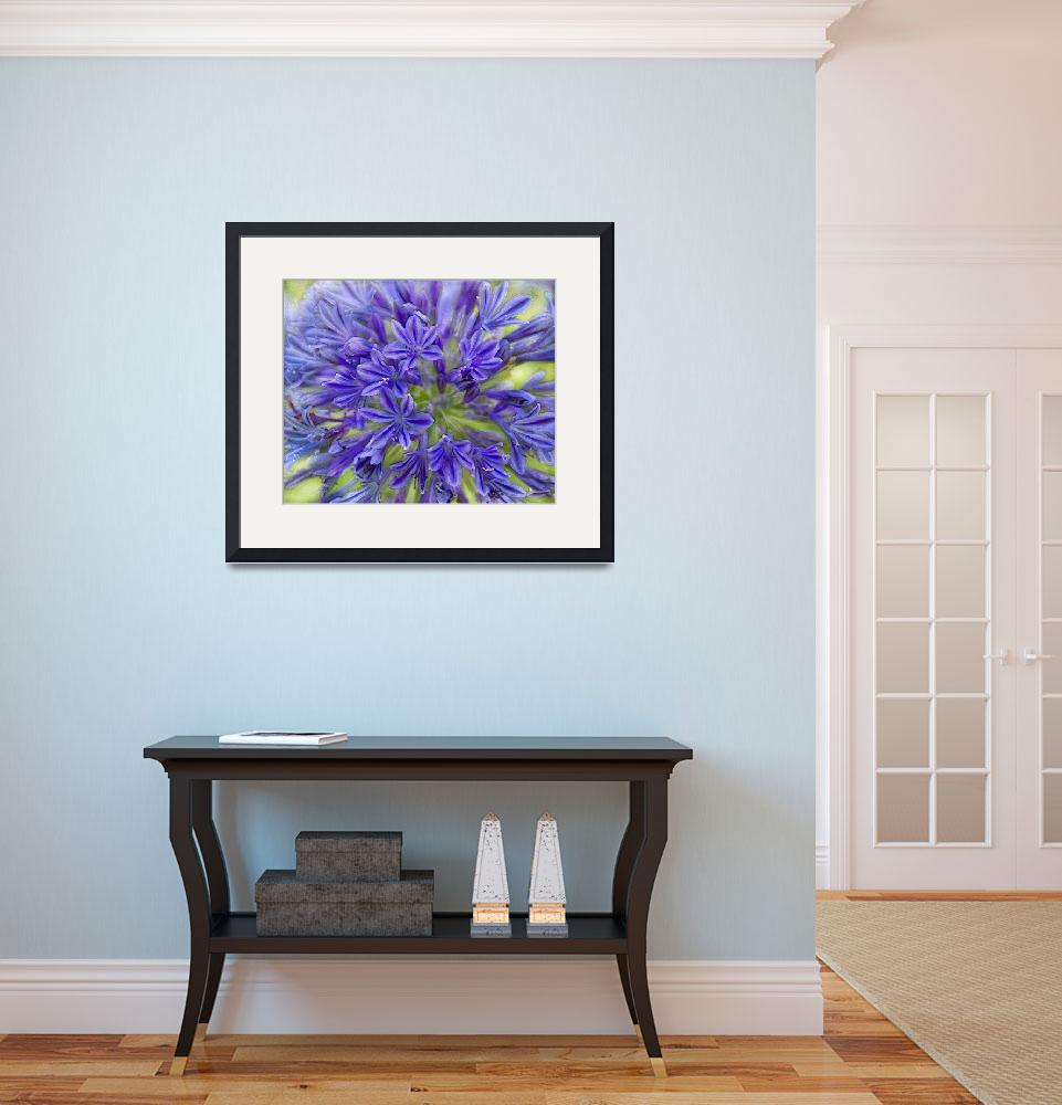 """""""Agapanthus&quot  (2012) by linde58"""