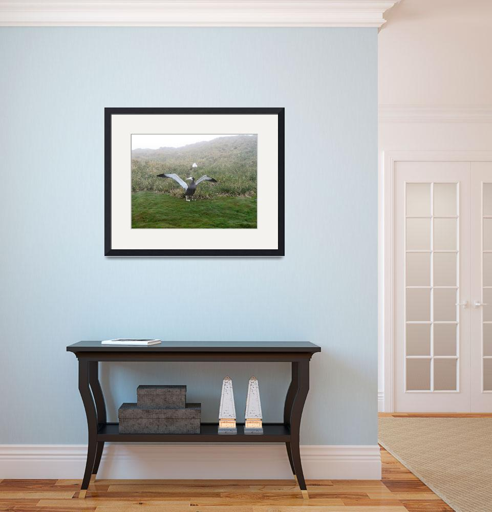"""""""Wandering albatross On Ground With Spread Wings&quot  (2008) by MarilynsArt"""