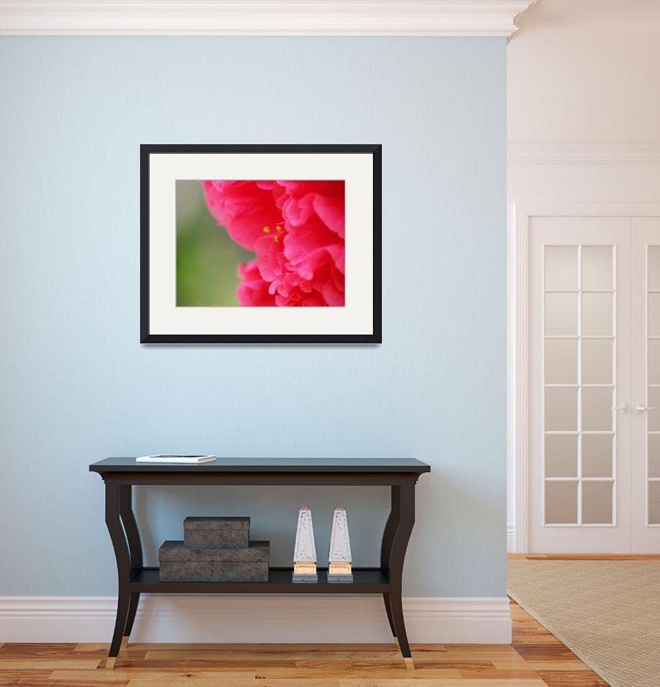 """""""Red-pink flower&quot  by SamAntonios"""