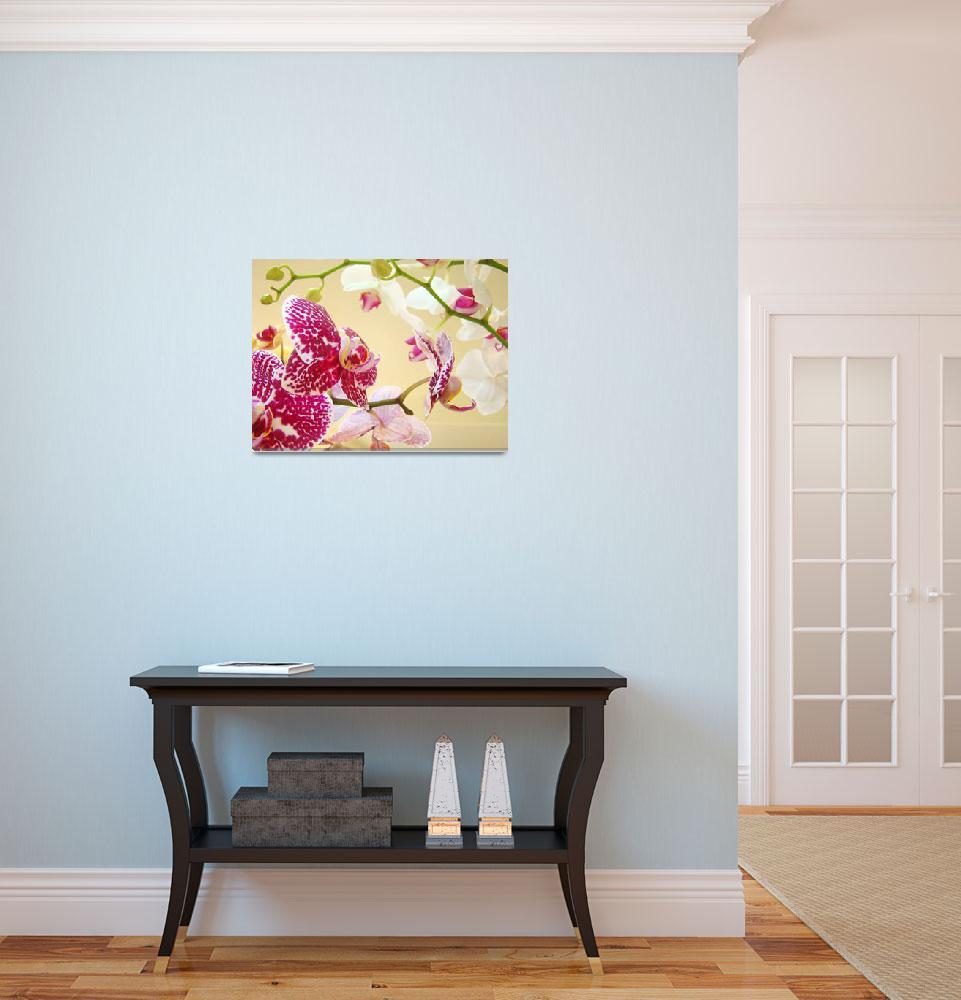 """Orchid Flowers art prints ORCHIDS floral&quot  (2013) by BasleeTroutman"