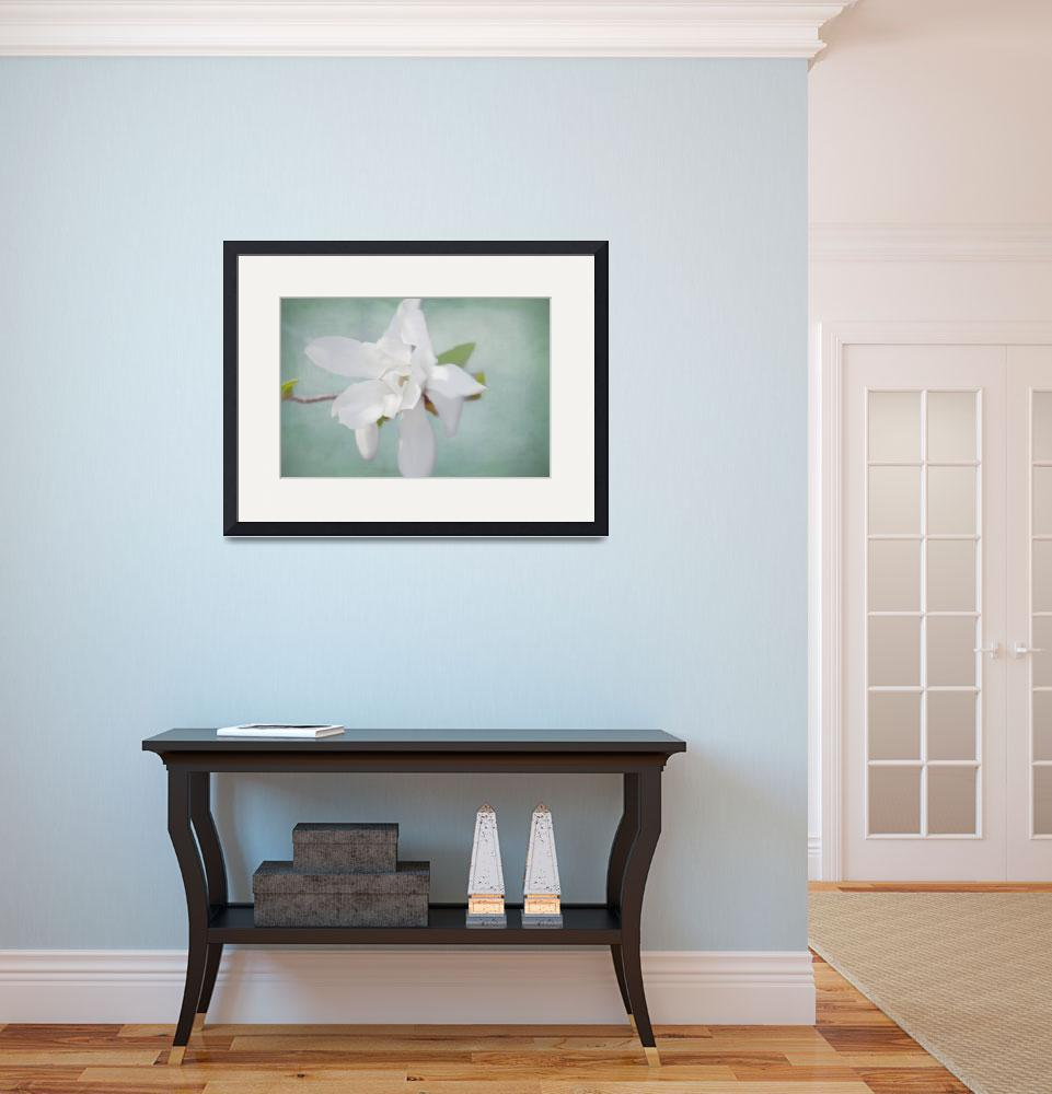 """""""White Magnolia&quot  (2014) by judystalus"""