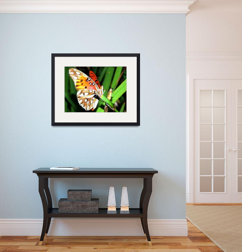 """""""Painted lady butterfly&quot  (2009) by rbb2676"""