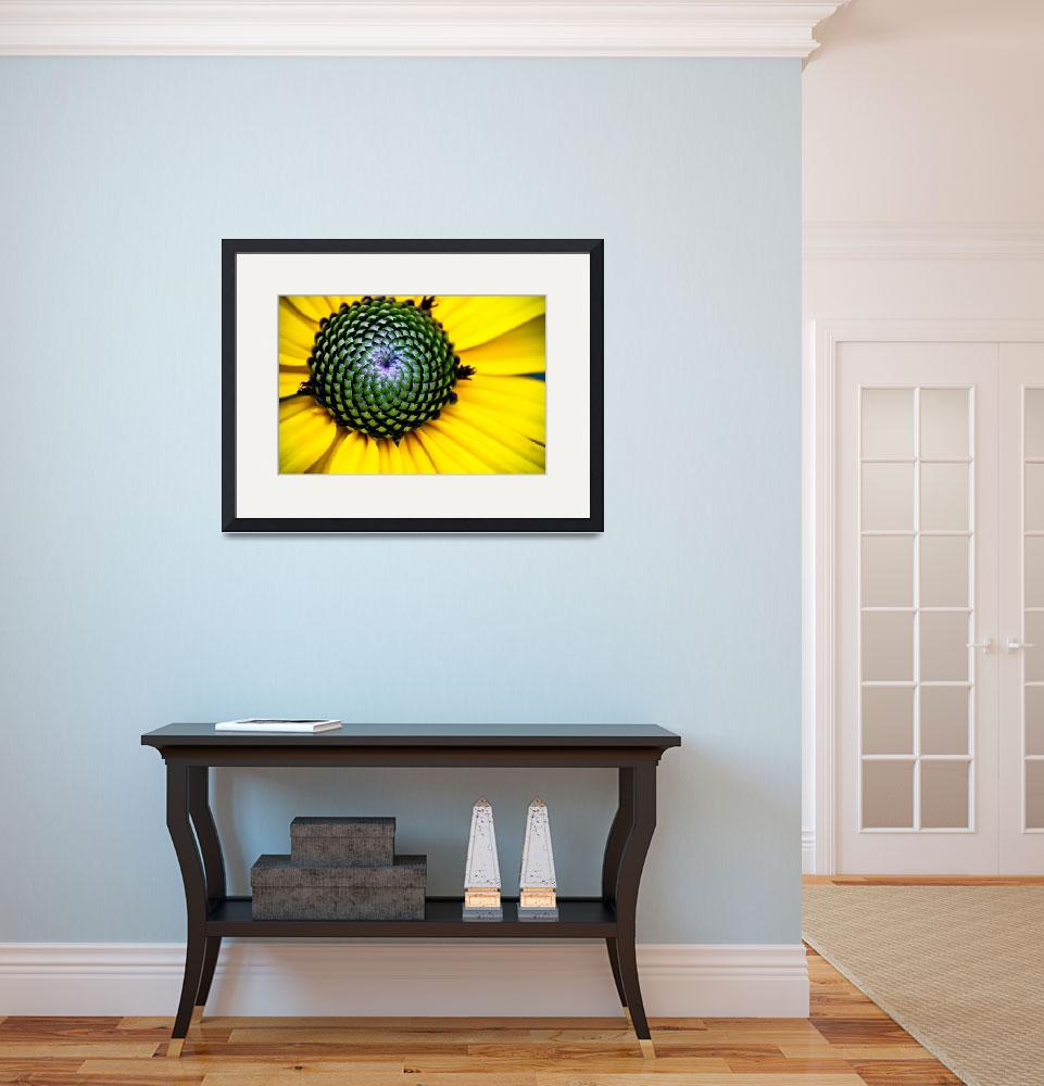 """""""YELLOW BLOSSOM OF THE GOLDSTURM BLACK EYED SUSAN""""  (2010) by photographybyryankelly"""