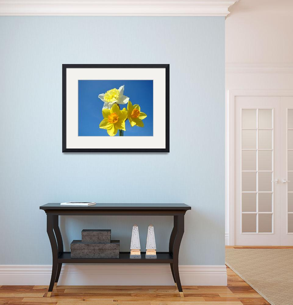 """""""Spring Daffodils Flowers Blue Sky gardens art&quot  (2014) by BasleeTroutman"""