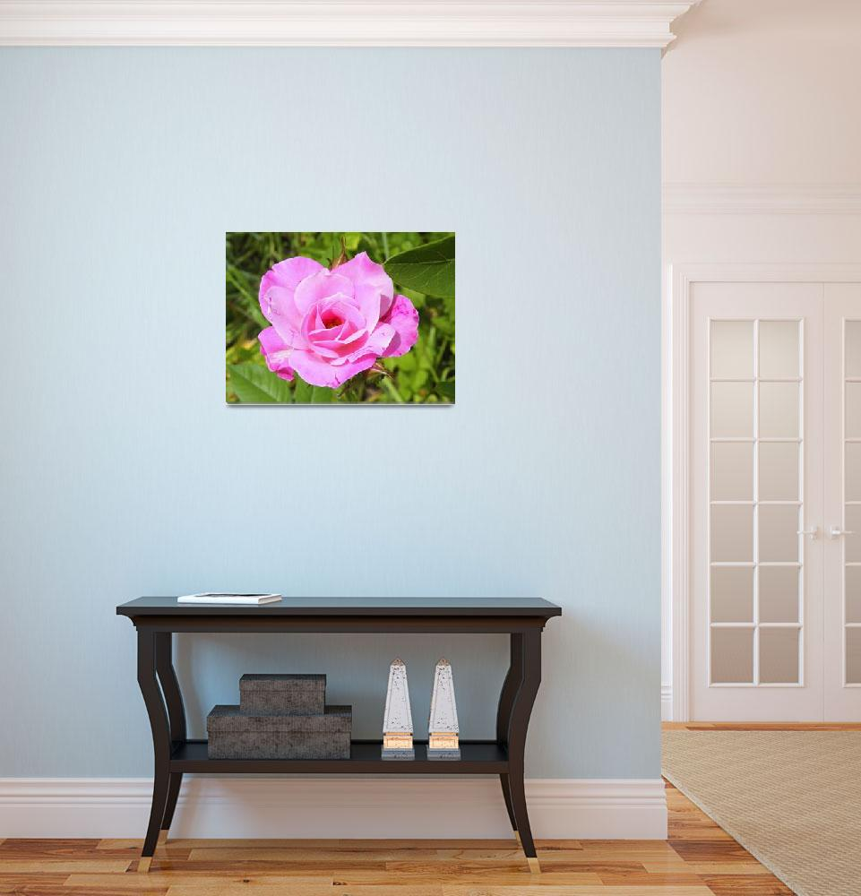 """""""Rose In Bloom&quot  (2009) by Kimmary"""
