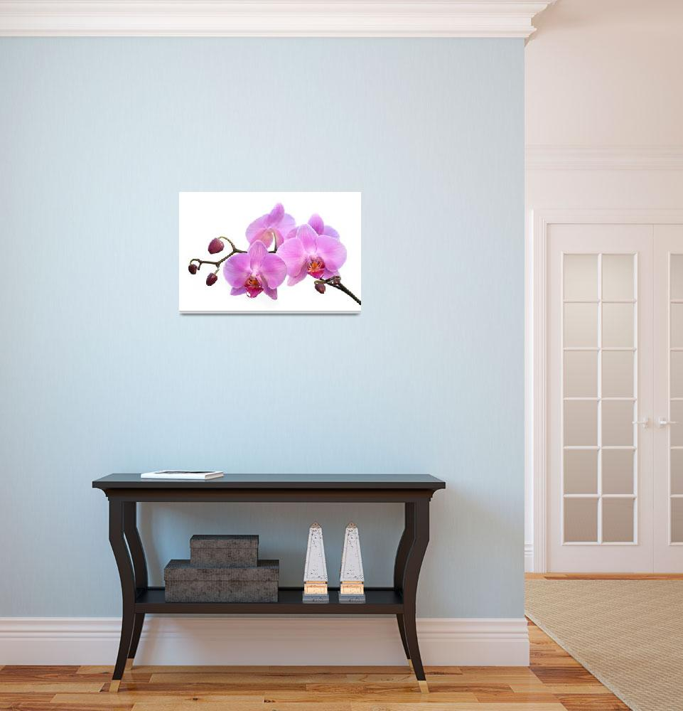 """Orchid Flowers - Pink&quot  (2012) by NatalieKinnear"