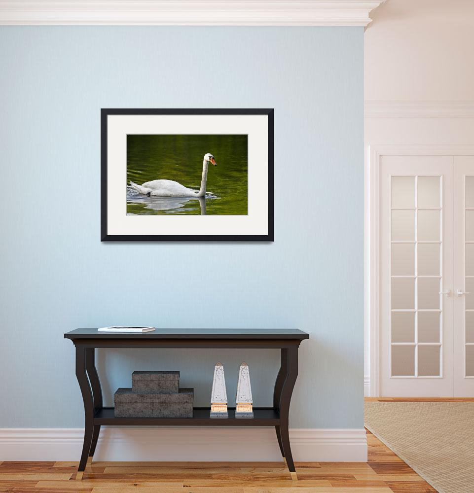 """""""Swan Swim&quot  (2010) by AirmetPhotography"""