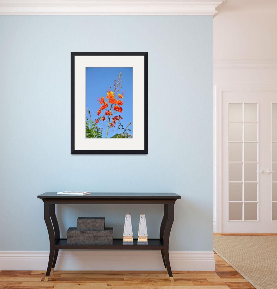 """""""The Mexican Bird of Paradise on Blue&quot  (2013) by Kirtdtisdale"""