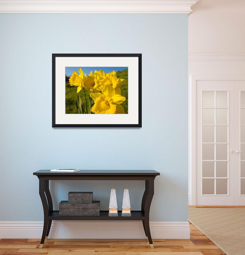 """Golden Yellow Daffodil Flowers art prints Spring&quot  (2010) by BasleeTroutman"
