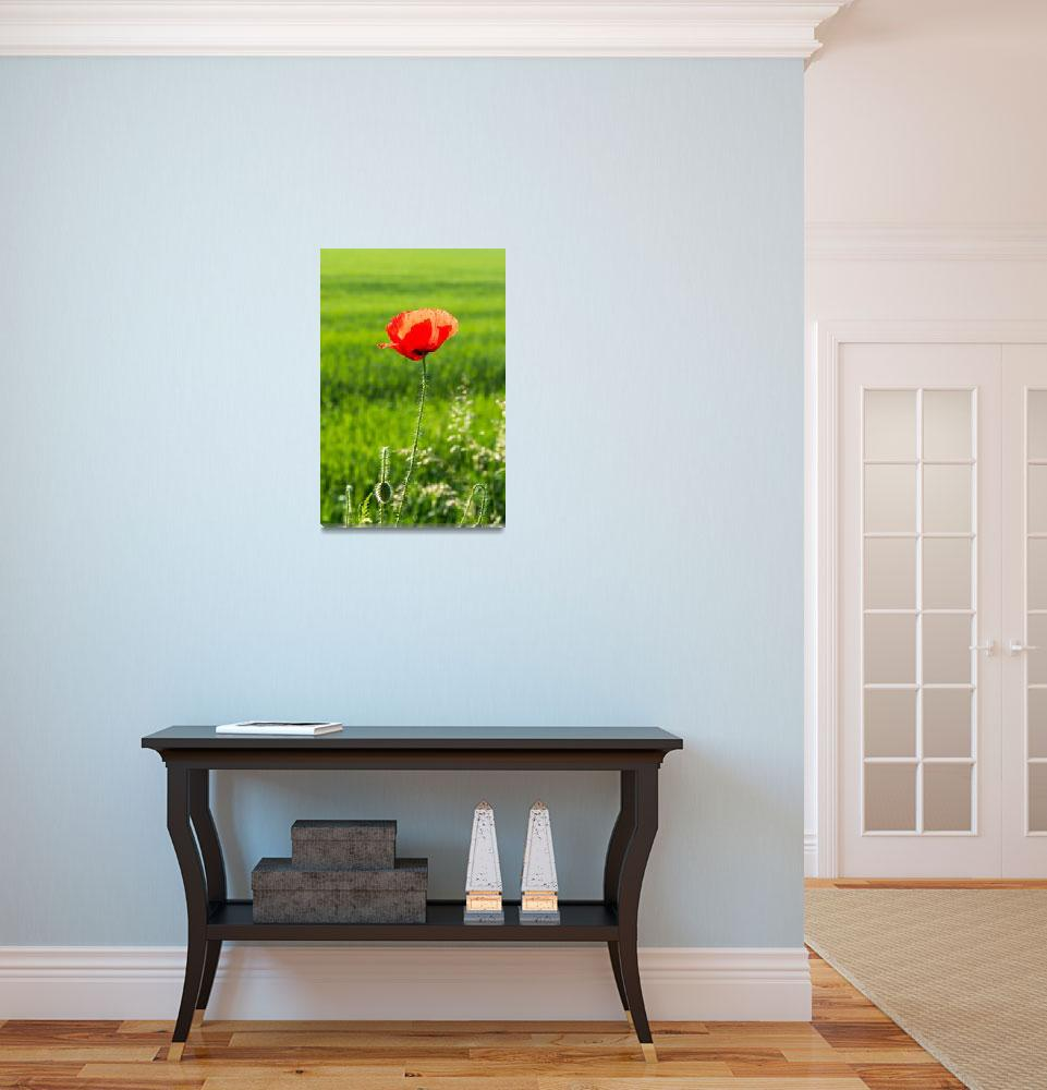 """""""Red poppy with blurred green natural background""""  (2016) by creative_photography"""