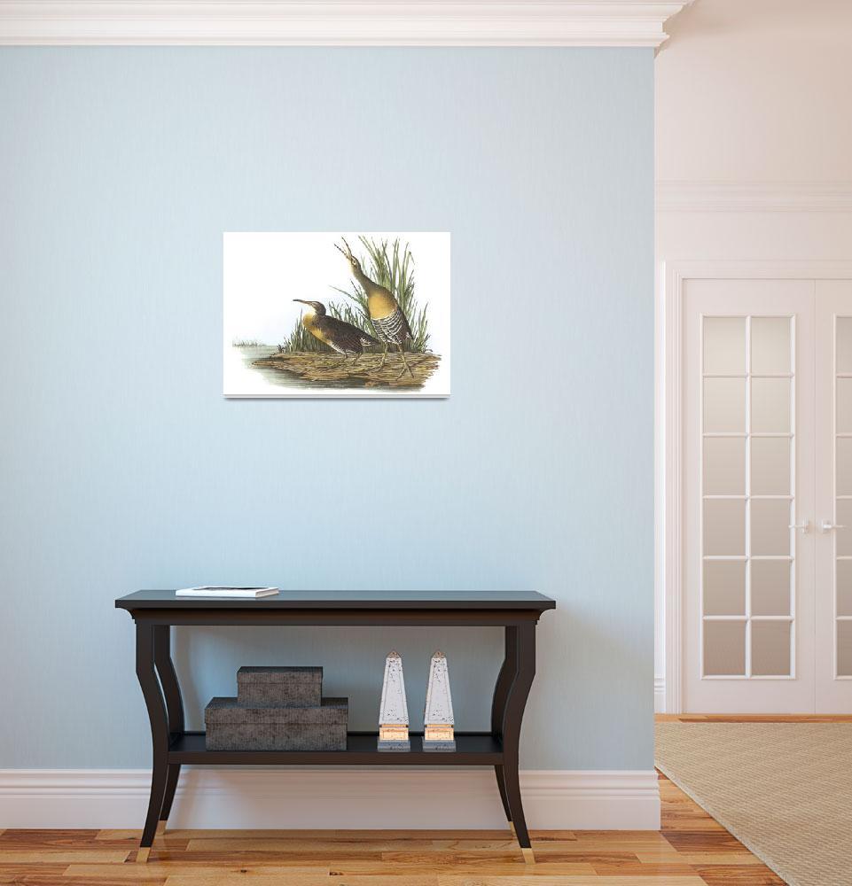"""Clapper Rail Bird Audubon Print&quot  by ArtLoversOnline"