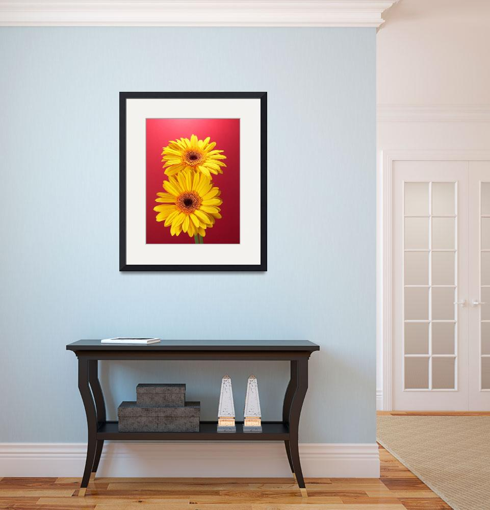 """""""Yellow Gerbera Daisies Superb&quot  (2006) by Infomages"""