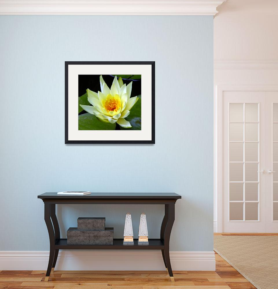 """""""Water Lily&quot  (2009) by MartinaRathgens"""