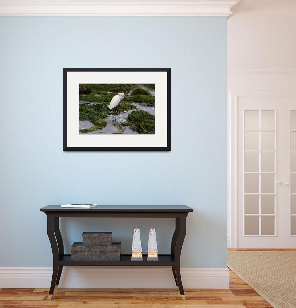 """""""Snowy Egret Green Self Reflection&quot  by JohnDaly"""