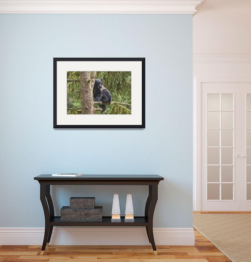 """""""Black Bear Cub in Tree at Anan Creek&quot  (2007) by SederquistPhotography"""