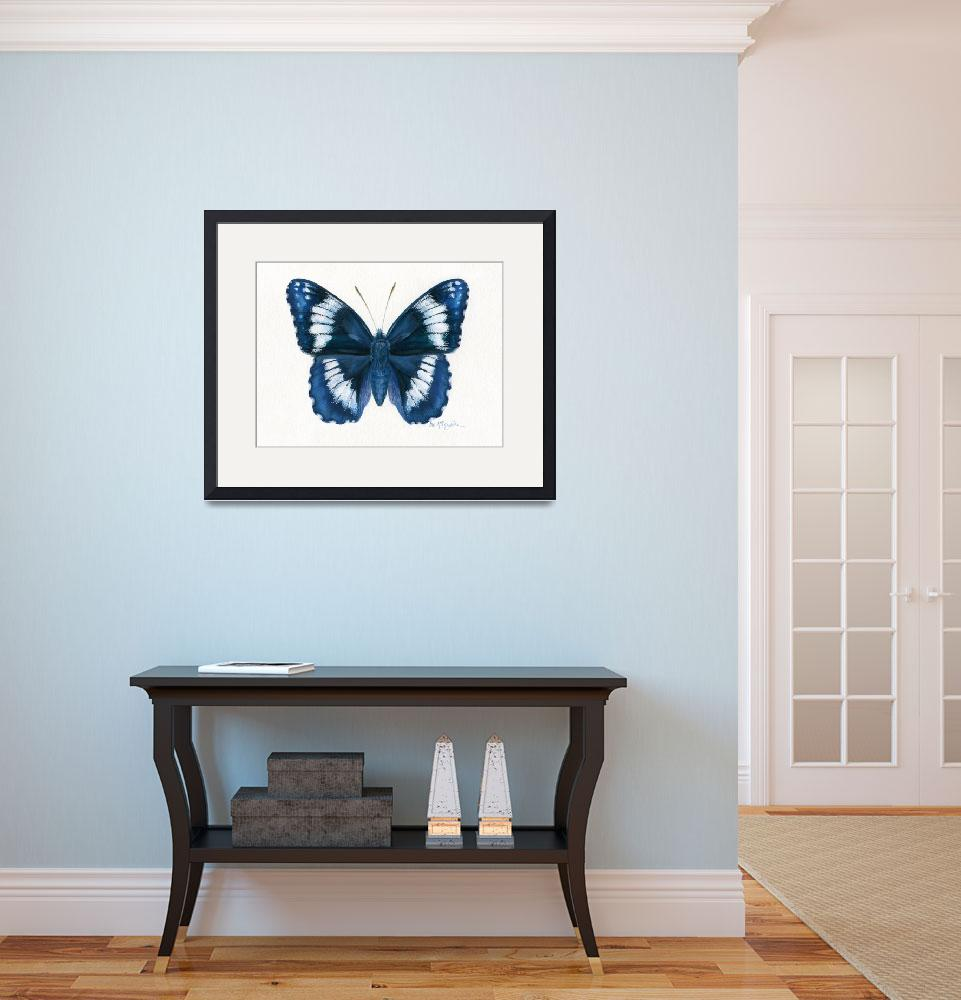 """""""Western Admiral butterfly&quot  (2008) by LisaMclaughlin"""