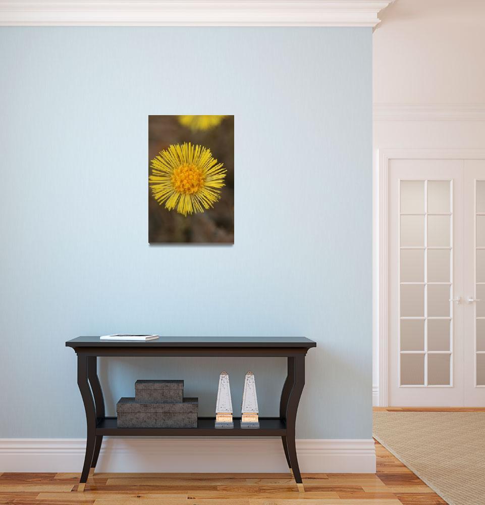 """""""Yellow daisy""""  (2008) by chuietta"""