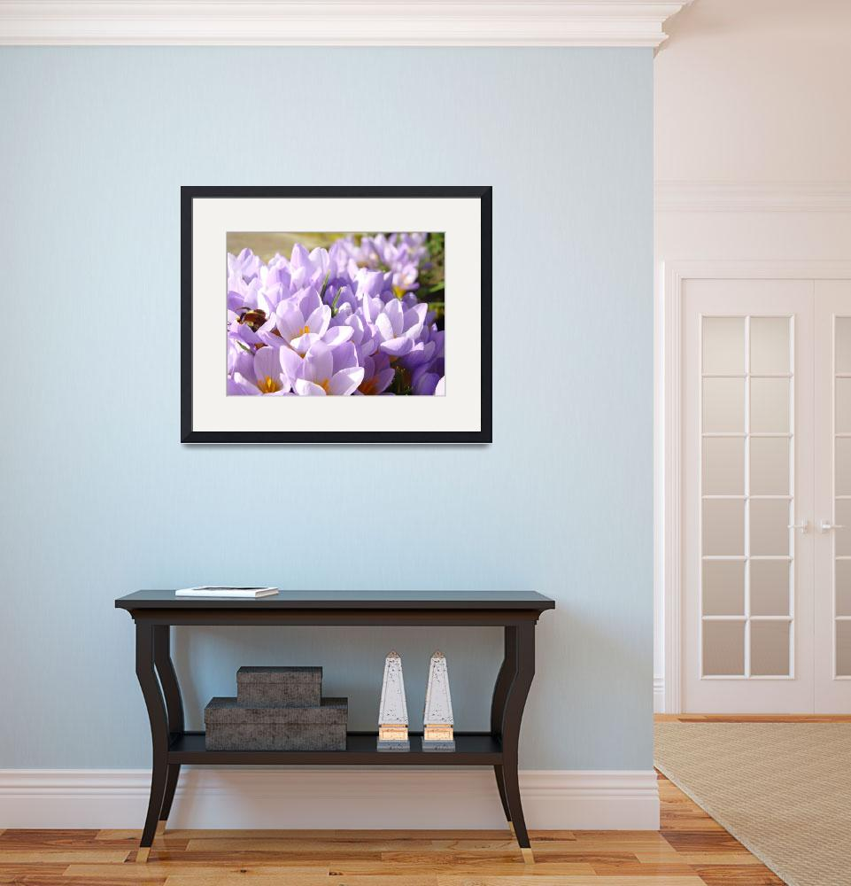 """Crocus Flowers Spring Gardens gifts Art Prints&quot  (2014) by BasleeTroutman"