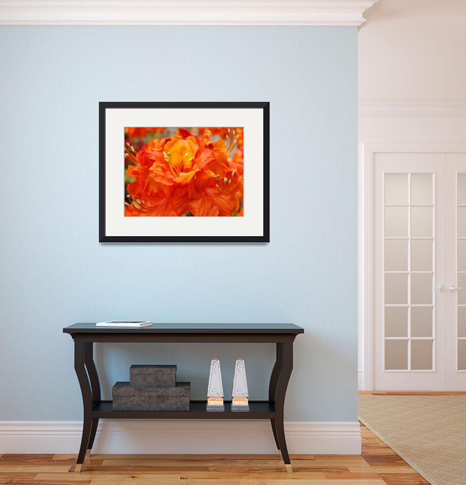 """Christmas Gift Gallery Orange RHODIES Art Gifts""  (2009) by BasleeTroutman"