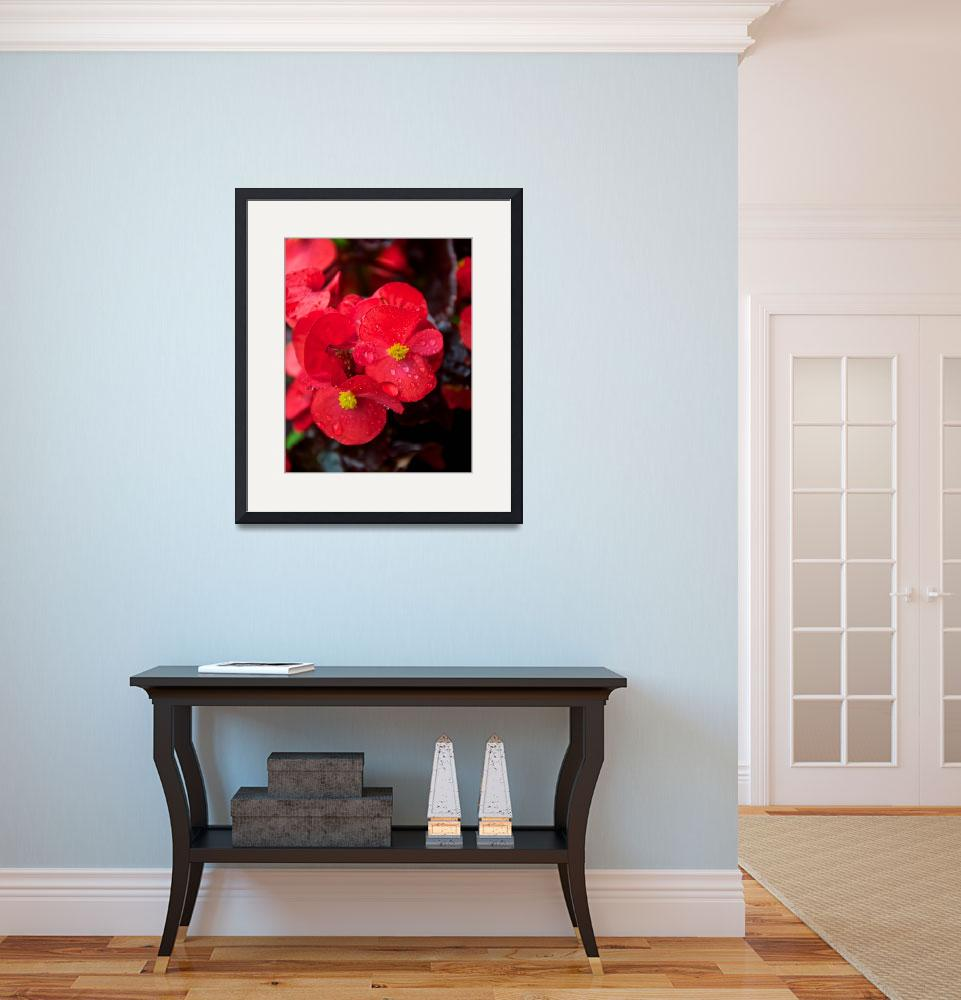 """""""Trailing Begonia&quot  (2012) by twostarphotography"""