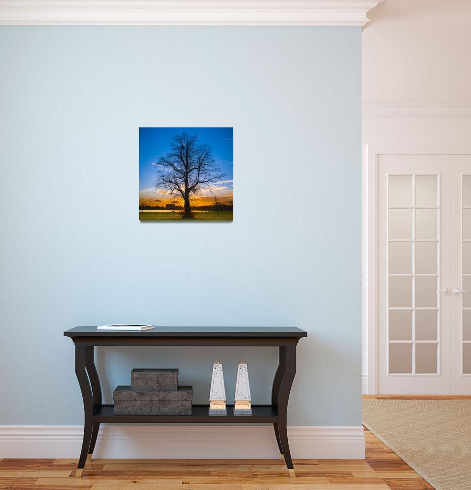 """A Tree - Sunset at Kensington Gardens, London""  (2012) by hafizismail"