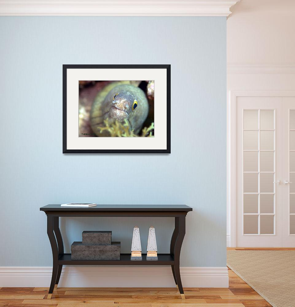 """""""Green Moray&quot  (2008) by TLTracyPhotography"""