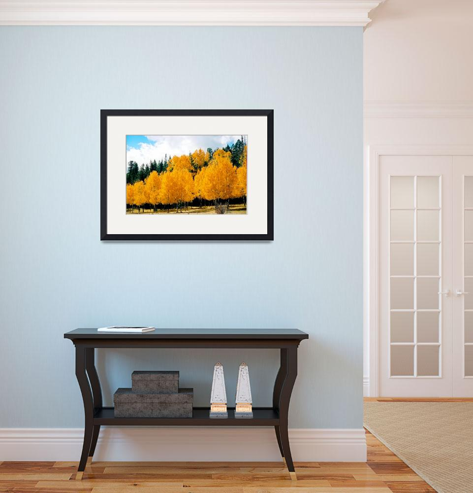 """""""Autumn Aspen&quot  (2004) by rayjacque"""