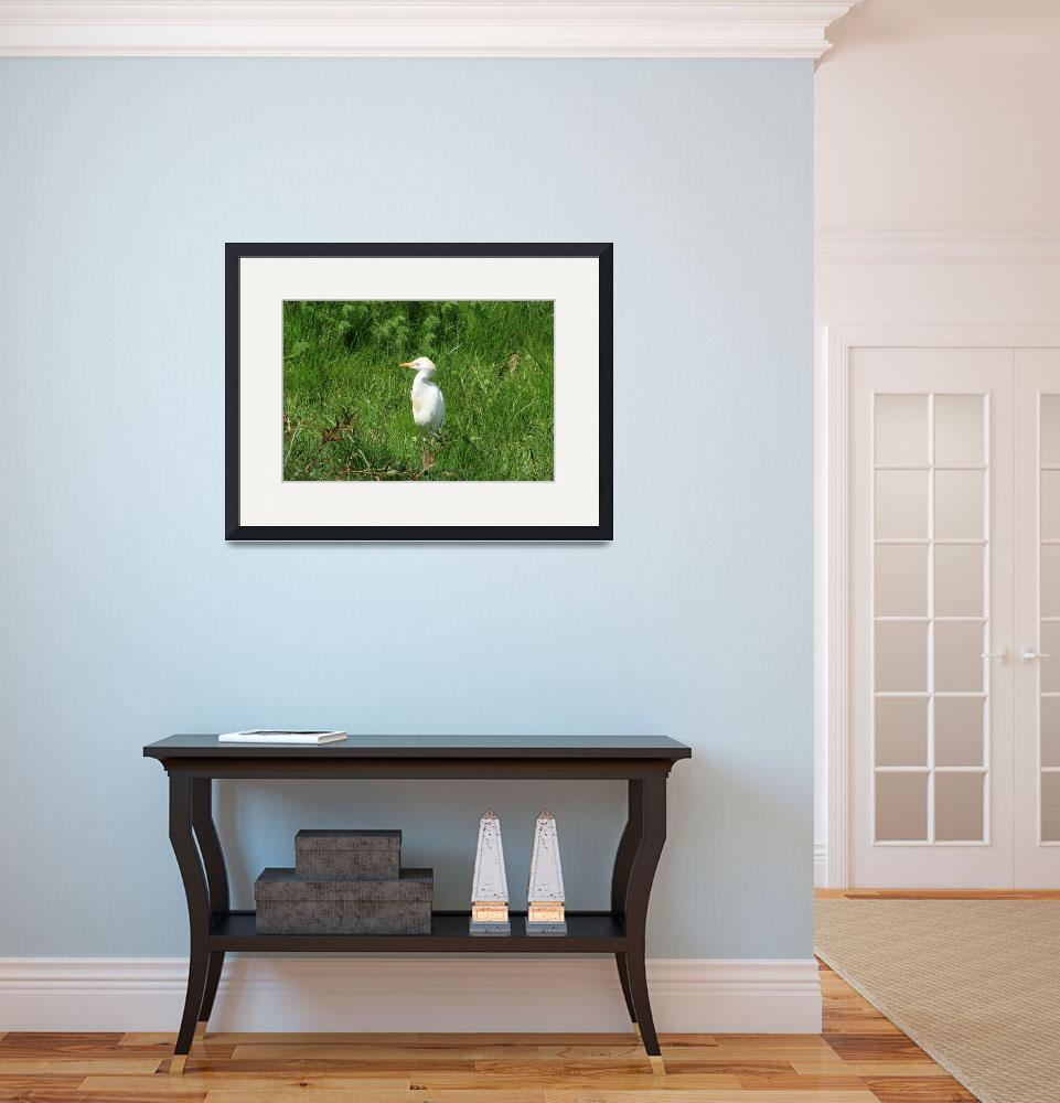"""""""Cattle Egret Standing&quot  (2012) by rhamm"""