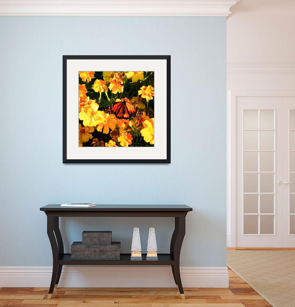 """Monarch and Marigolds&quot  (2009) by rayjacque"